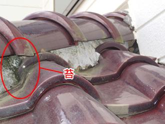 千葉県千葉市花見川区 屋根葺き替え 屋根点検 漆喰に苔が生えている