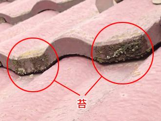 千葉県 市原市 屋根点検 瓦に発生した苔 拡大