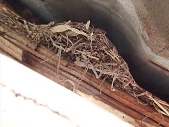 千葉県 市原市 屋根点検 鳥の巣1