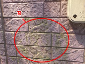 千葉県習志野市 屋根塗装 外壁塗装 点検の様子 外壁 苔 繁殖