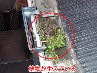 千葉県袖ヶ浦市 屋根塗装 棟板金交換 屋根点検 雨樋に植物が生えている