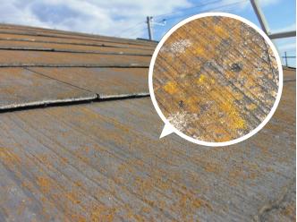 屋根材の色褪せ、苔、カビ、藻の発生をチェック