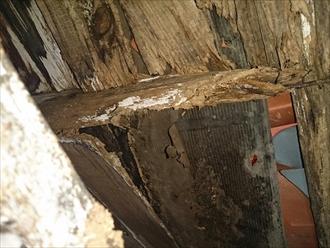戸塚区、野地板と垂木