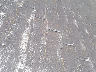 杉並区、多少残っている自然石