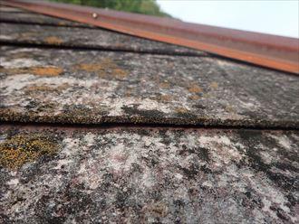スレート,苔,屋根材
