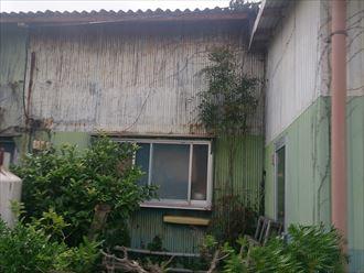 植物,建物