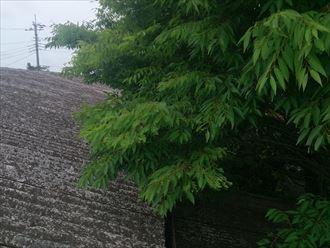 植物,屋根,金属