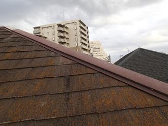 墨田区 屋根塗装前の屋根には苔が生えている