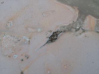袖ケ浦市 防水層の亀裂