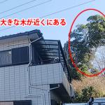 東大和市狭山で落ち葉詰まりの雨樋清掃、近くに大きな木がある場合は定期的な清掃が必要です