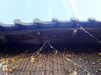垂木自体が曲がっている