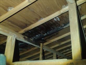 木更津市 屋根からの雨漏り
