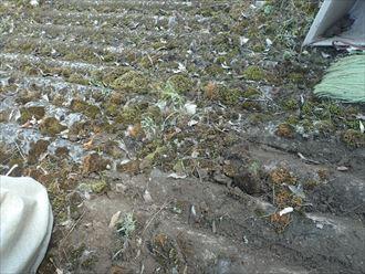 佐倉市 草や土の堆積