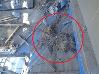 東金市 鳥の巣